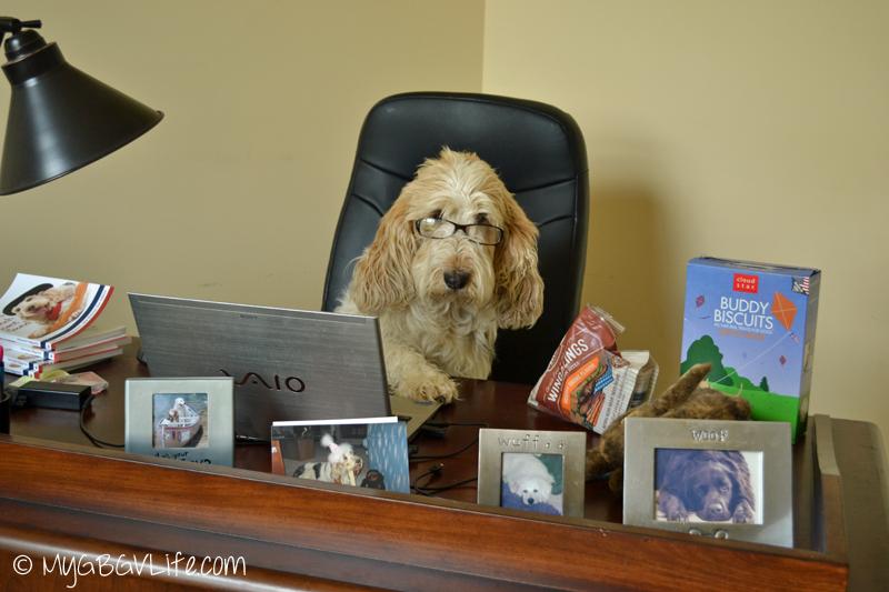 My GBGV Life Emma Chief Blogging Officer