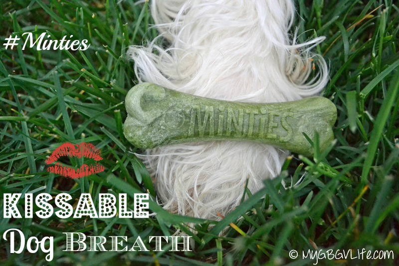 My GBGV LIfe Minties for better dog breath