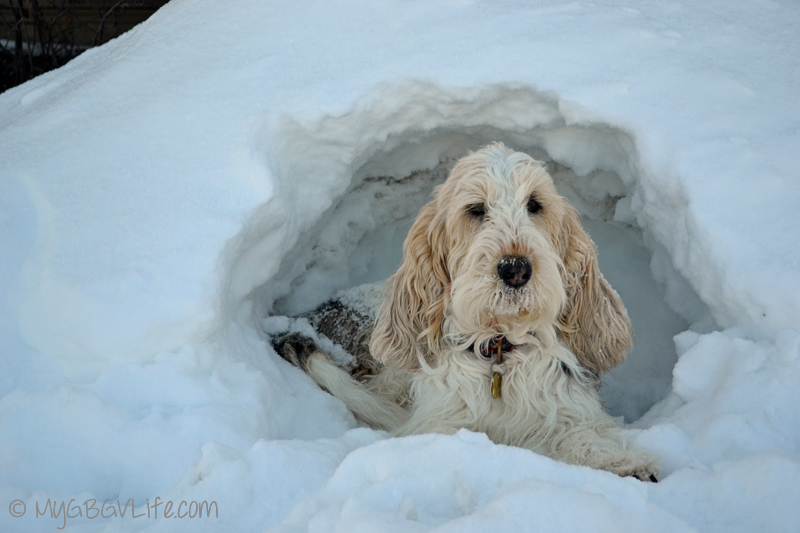My GBGV Life #DogFun Why life with dogs is best in the snow