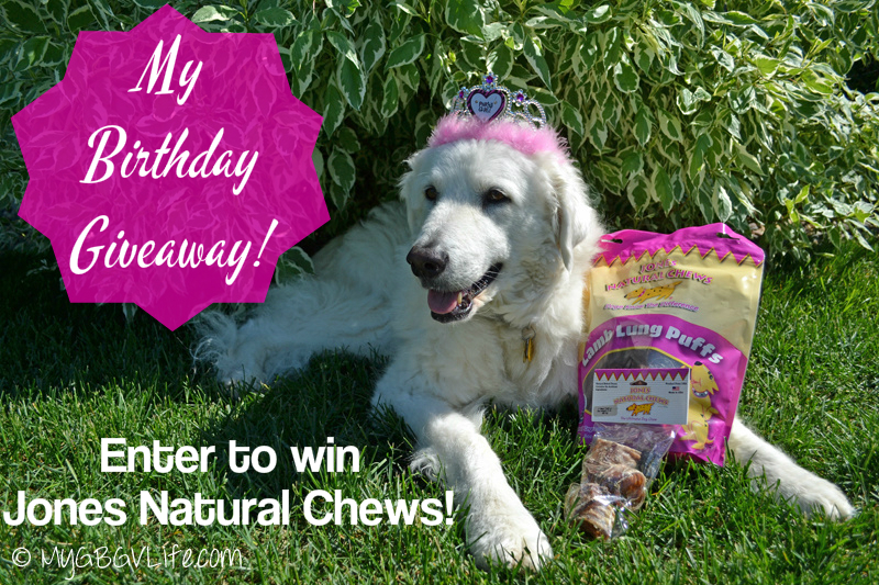 My GBGV Life Katie's 12th birthday giveaway