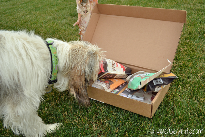 My GBGV Life Bailie sneaking treats out of my box