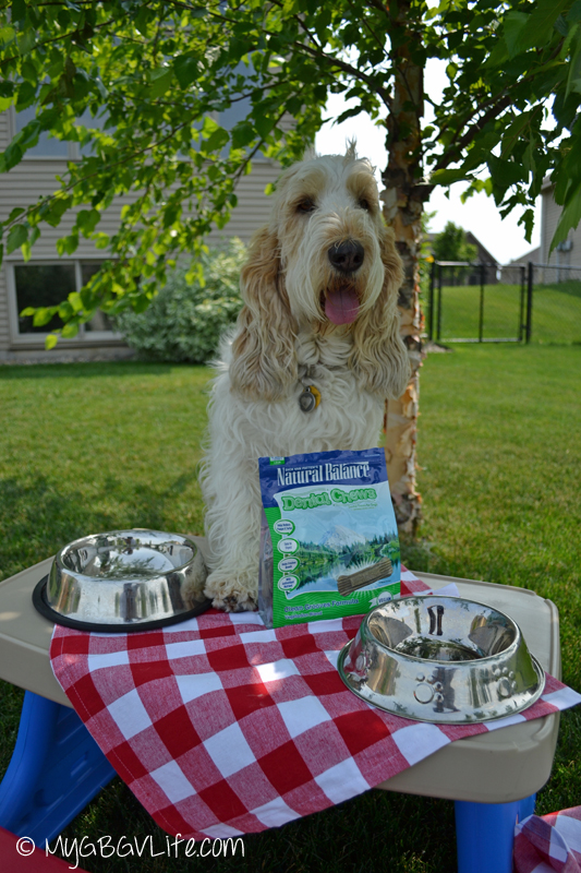 My GBGV Life chewy.com review of Natural Balance Dental Chews brought by the delivery dog