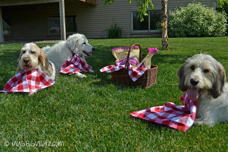 My GBGV Life having a Jones Natural Chews picnic