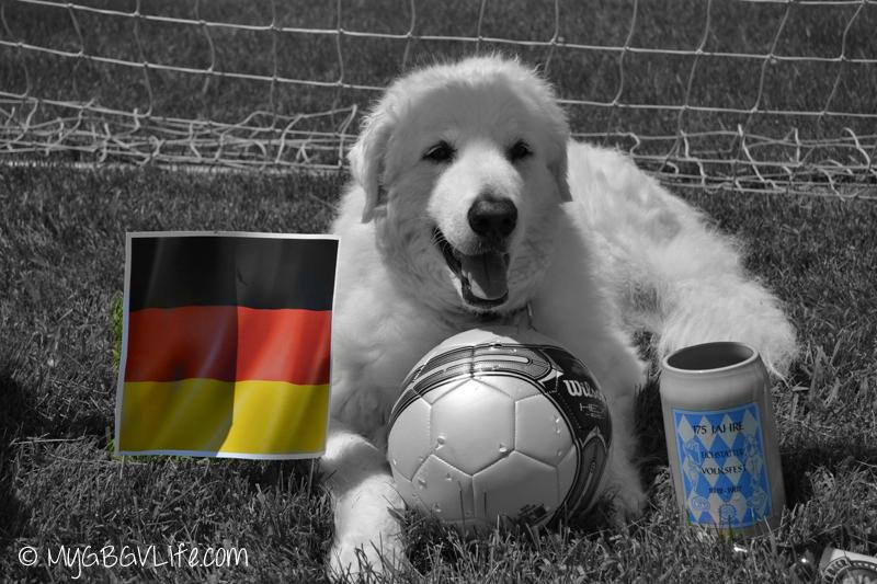 My GBGV Life Kuvasz Katie world cup Germany fan