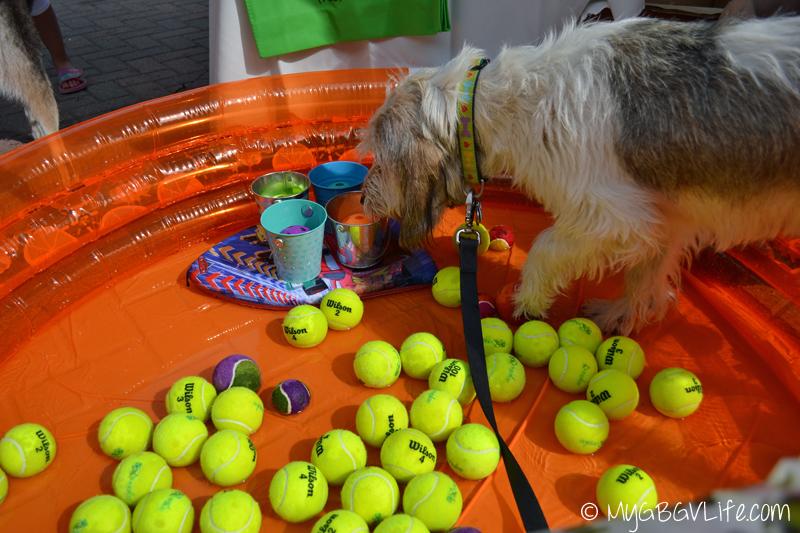 My GBGV Life woofstock bobbing for tennis balls