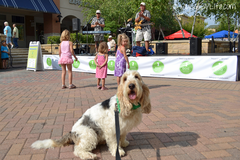 My GBGV Life with the teddy bear band at woofstock