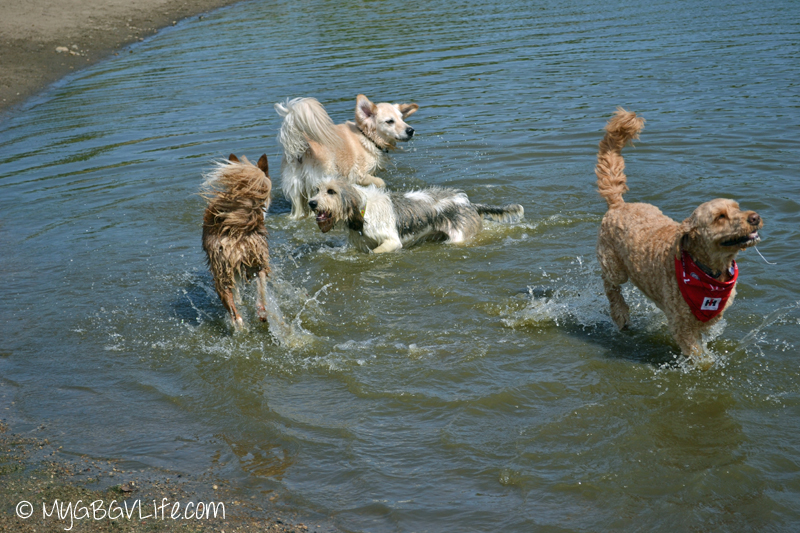 My GBGV Life friends playing games in the water
