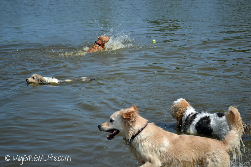 My GBGV Life Bailie and Spencer swimming