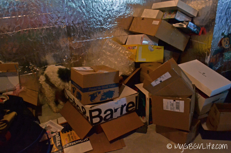 My GBGV Life digging for a cat and dog box