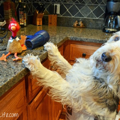 Can A Dog Make Freeze Dried Turkey At Home? #Chewy.com