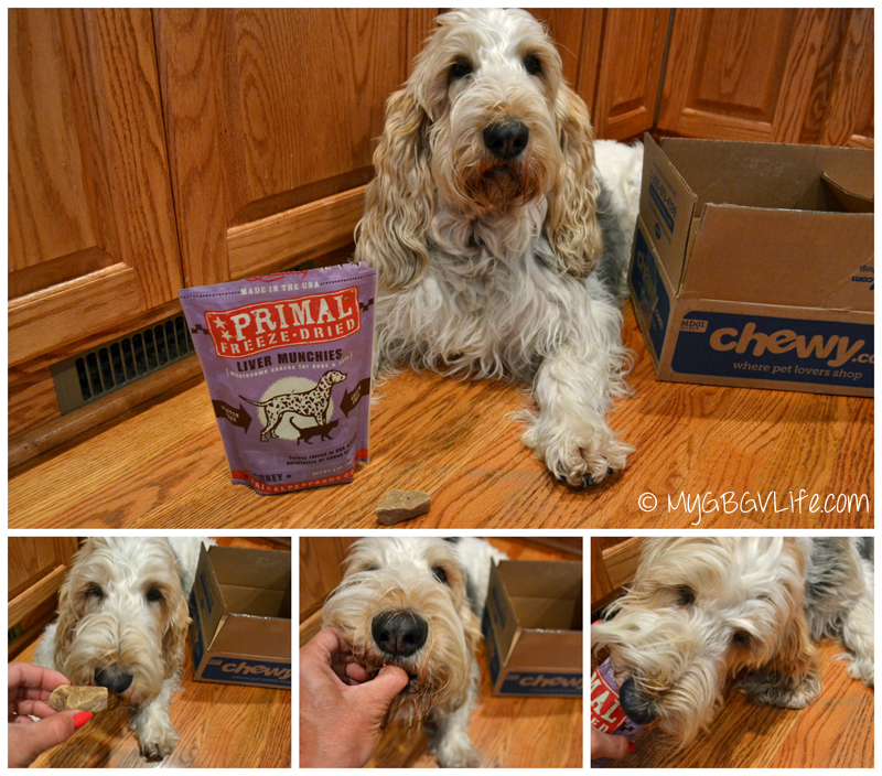 My GBGV Life testing Primal freeze dried Liver Munchies