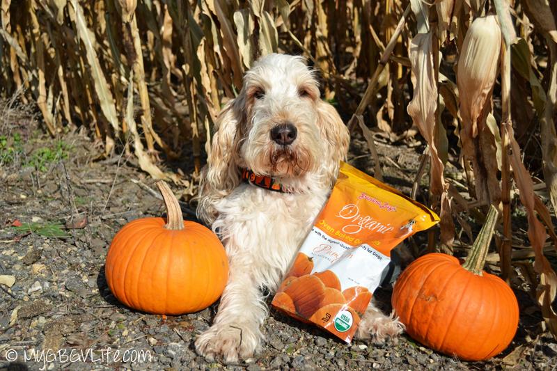 My GBGV Life Grandma Lucy's Pumpkin Dog Treats