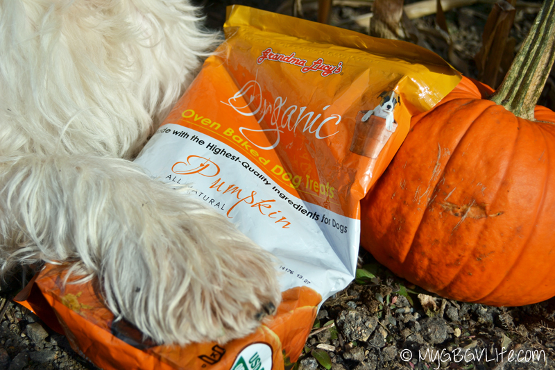 My GBGV Life paw on Grandma Lucys Pumpkin Treats