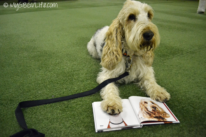 My GBGV LIfe Emma shows off her photo in DOGFACE the book