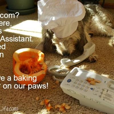 Kitchen Disaster With Pumpkin? Frett No More!