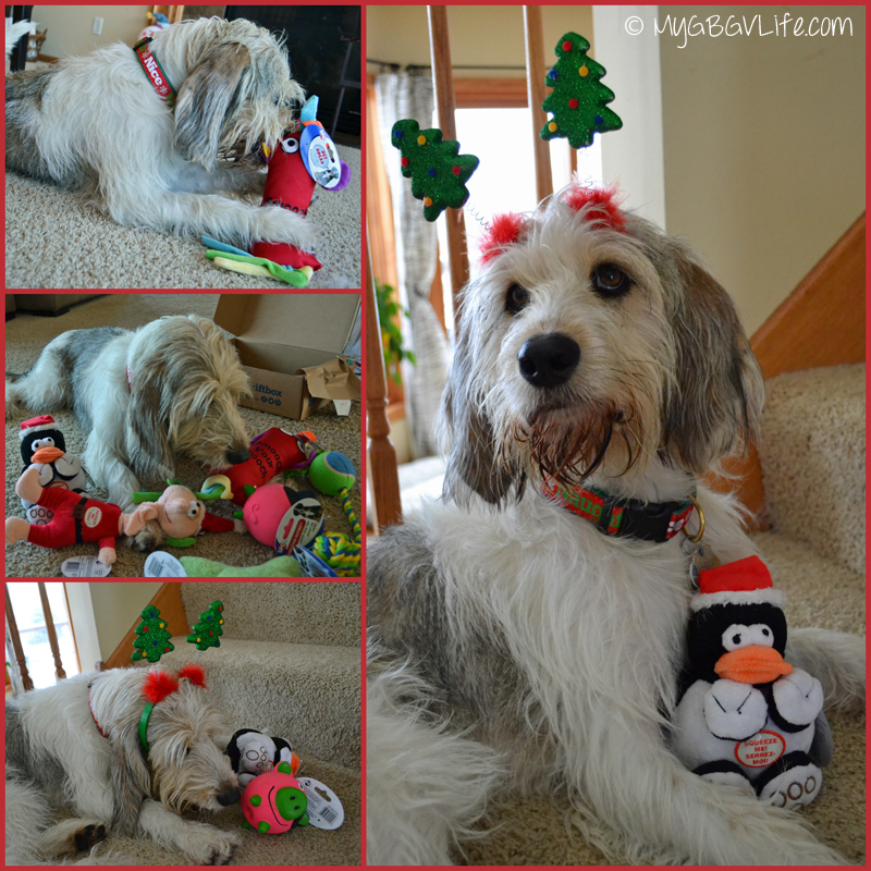 My GBGV Life Bailie with Pet Gift Box toys