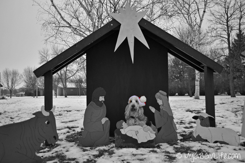 My GBGV Life Emma in the manger