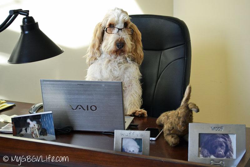My GBGV Life Pet Blogger Challenge 2015