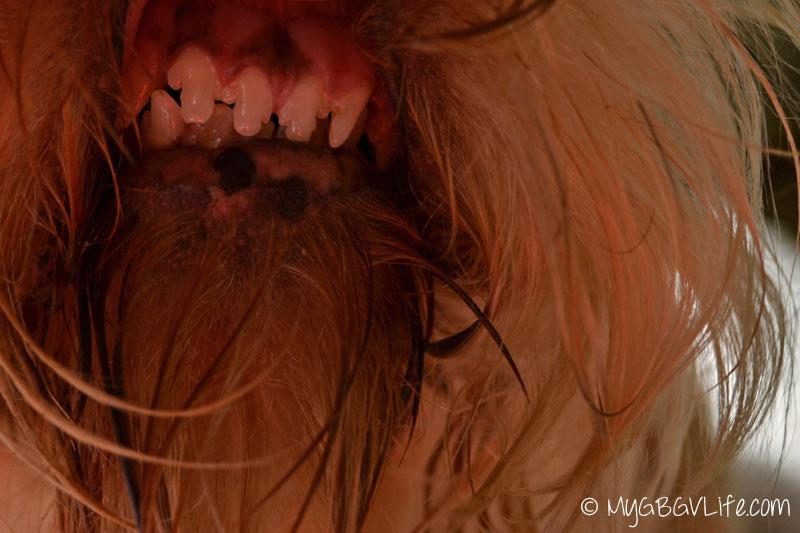 My GBGV Life Emma's smiley teeth