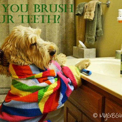 Should You Brush Your Dog's Teeth