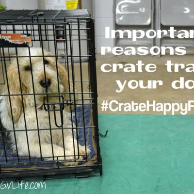 Important Reasons To Crate Train Your Dog #CrateHappyPets