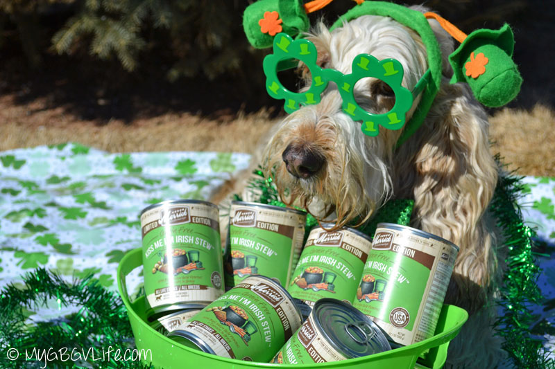 My GBGV Life St. Patrick's Day with cans