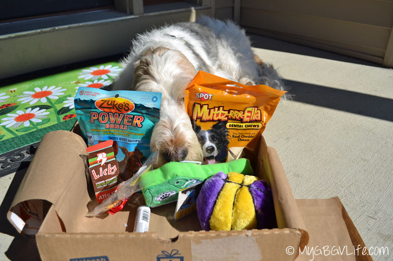 My GBGV Life nose in basketball pet gift box