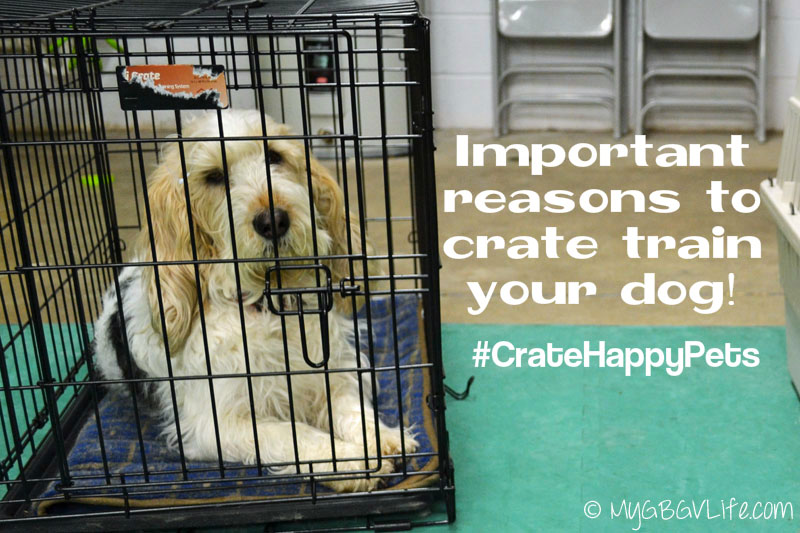 My GBGV Life crate train your dog