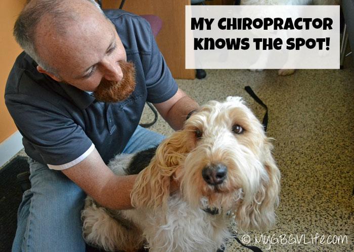 My GBGV Life animal chiropractor visit