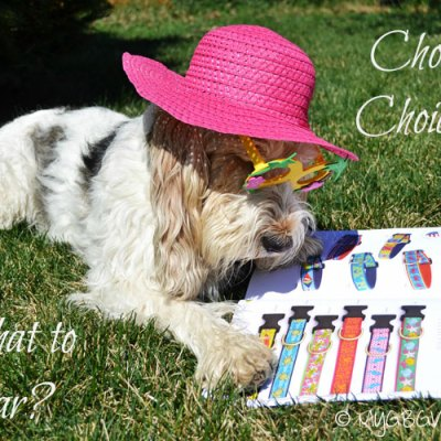 Deciding What To Wear At BlogPaws