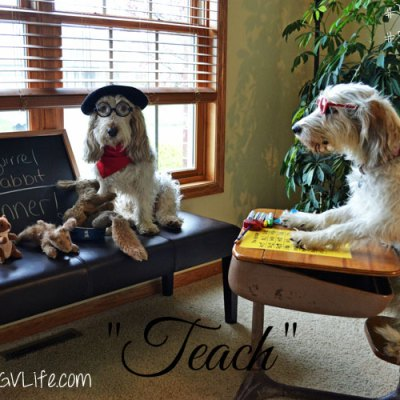 How To Successfully Teach Your Dog Math