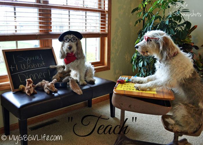 My GBGV Life teach a dog math