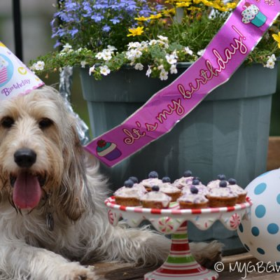 Woo Hoo! Bailie Is Turning Two! #MultiPetMania
