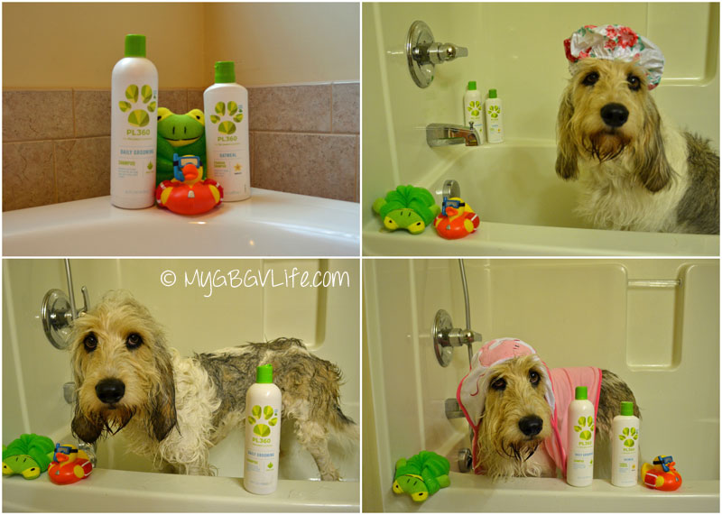 My GBGV Life P360 shampoo