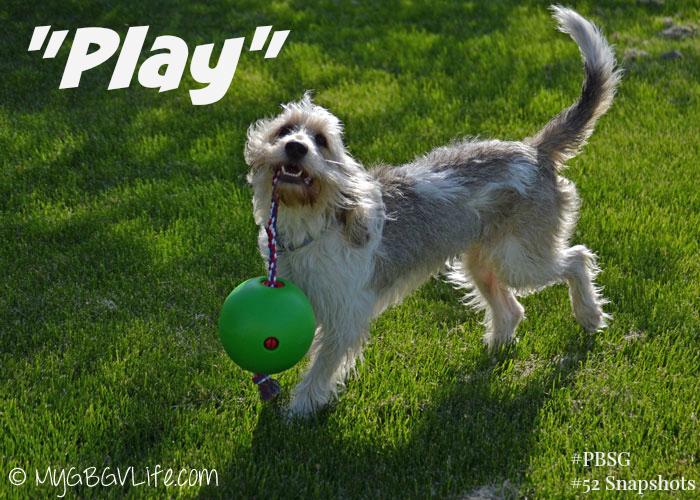 My GBGV Life Play #PBSG #52Snapshots of Life Photo Challenge