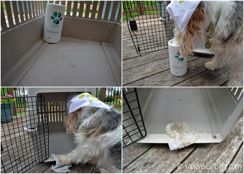My GBGV Life PL360 cleaning wipes