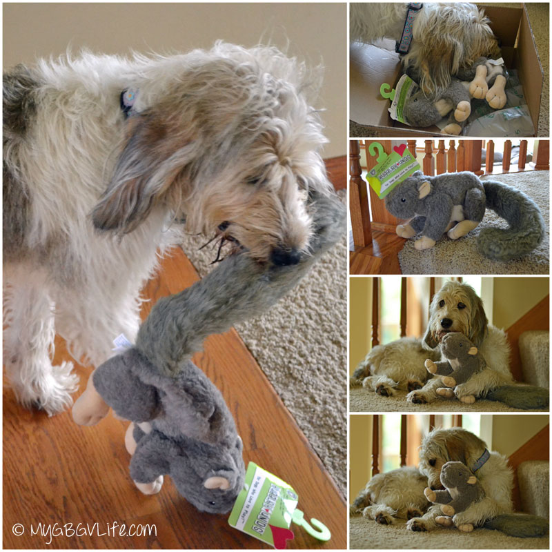 My GBGV Life with huggle hound