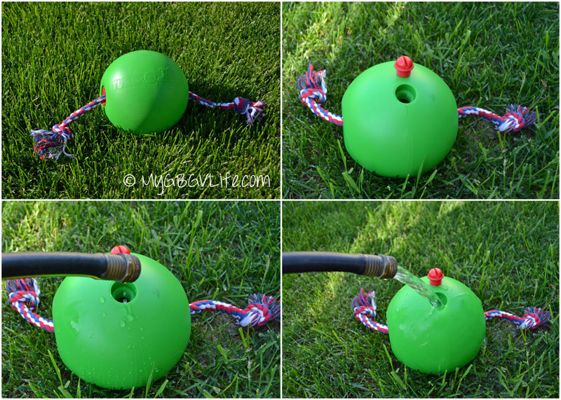 My GBGV Life adding water to the tuggo dog toy