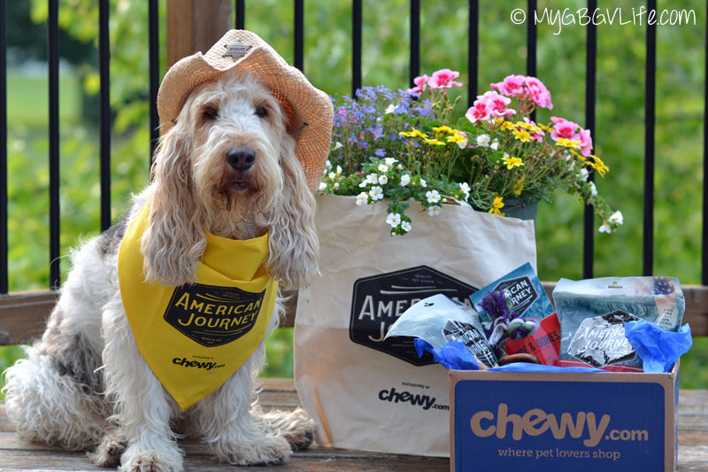 My GBGV Life #AmericanJourney from Chewy.com is the new sheriff in town