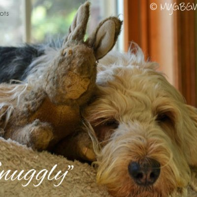 Getting Snuggly With Bunny
