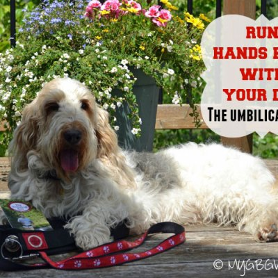 3 Reasons To Run Hands Free With Your Dog