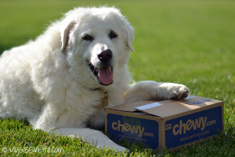 My GBGV Life Katie with chewy.com box