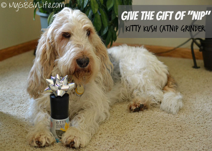 My GBGV Life why I gave cat bro Bert the gift of nip