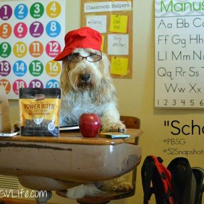 Back To Dog School