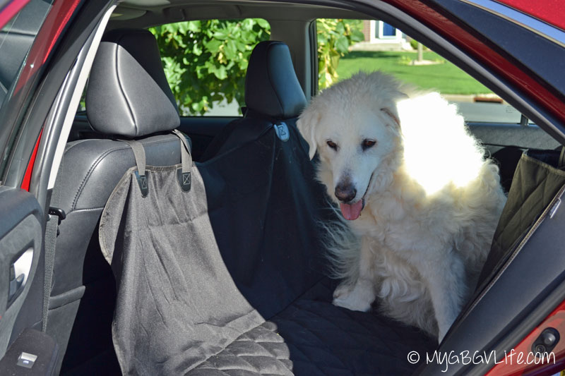 My GBGV Life keep the fur off the seats with a seat cover