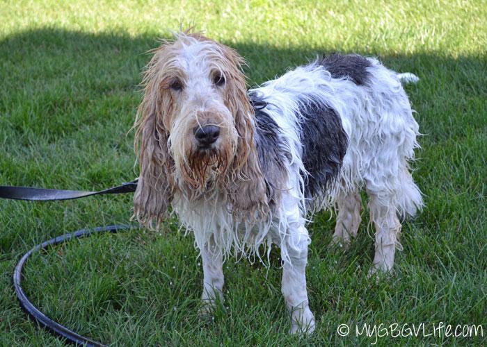 My GBGV Life done with yard bath