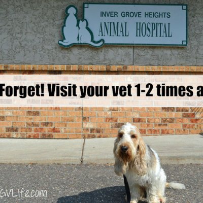 The Annual Family Vet Visit – And The Healthiest Pet Is?