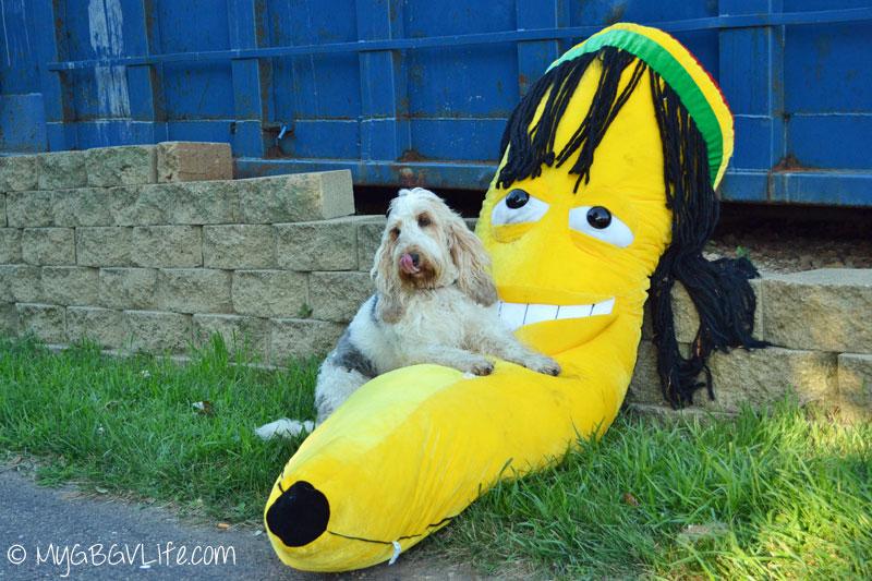 My GBGV Life wanting to eat the banana