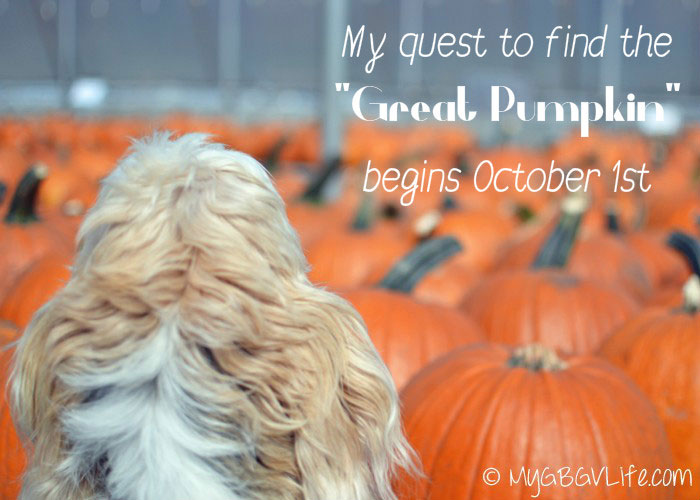 My GBGV Life my search for the great pumpkin begins October 1