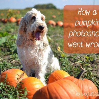 A Pumpkin Photoshoot Gone Wrong